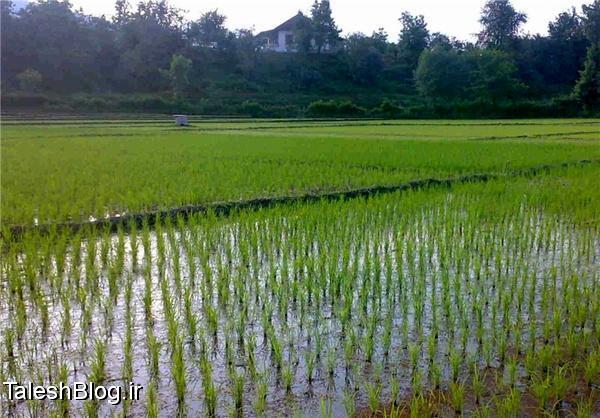هشت پهنه ذخیره آب کشاورزی در هشتپر لایروبی میشود