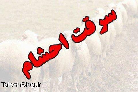 دستگیری باند گرگهای گله در رضوانشهر