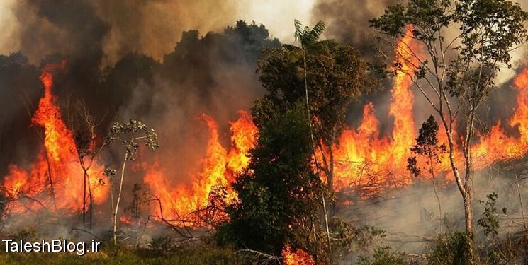 جنگلهای گیلان در محاصره آتش